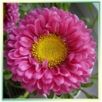 aster,3,640