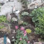 Unser Garten 2012  die Clematis blüht