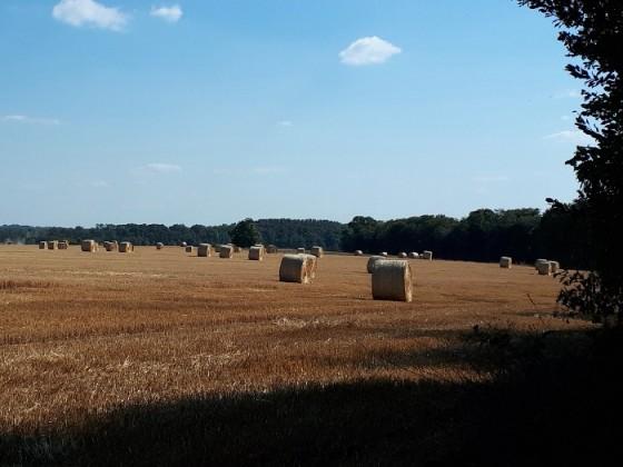 Kornfeld nach der Ernte