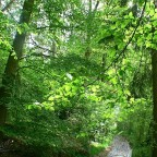 Der Frühlingswald
